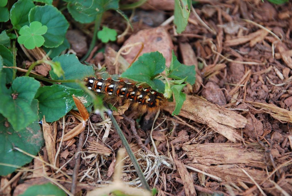 + Caterpillar