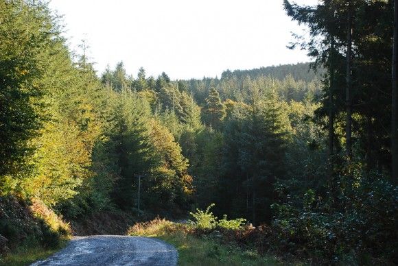 Haldon Forest - Deer Walk 4