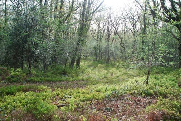 Yarner Wood 2